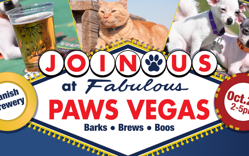 Paws Vegas announcement