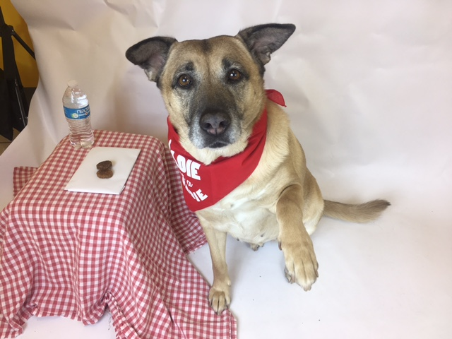 Dog with paw encouraging people to volunteer