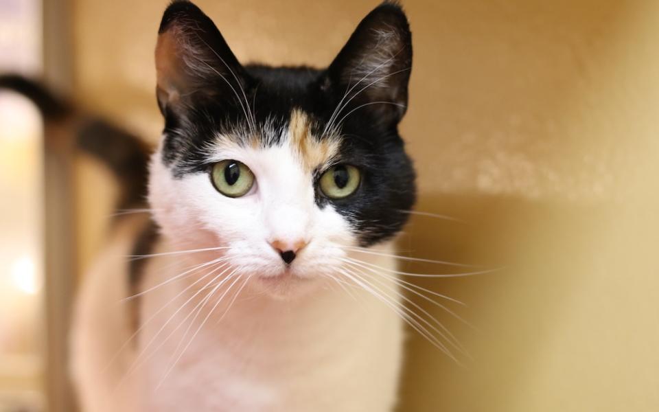 Lost Dog Cat Rescue Foundation Va