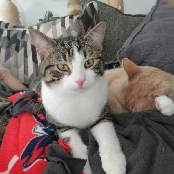 pasteurella in cats