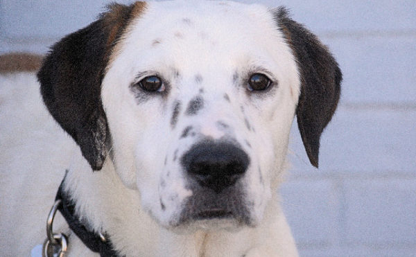 Snoopy Lost Dog Amp Cat Rescue Foundation