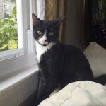 Music Icon Kittens: Sonny