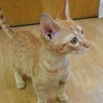 B Kittens: Ben