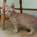 B Kittens: Bruno