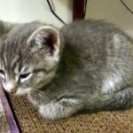 Leah's Kittens: Chance