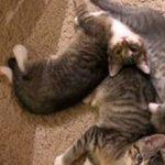 Leah's Kittens: Moxie
