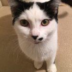 GWTW Kittens: Rhett
