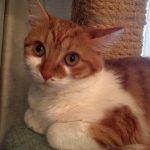 GWTW Kittens: Scarlett