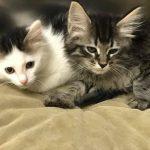 WV Kittens: Bonnie