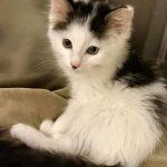 WV Kittens: Brody