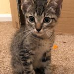 Super Cute kittens: Calvin