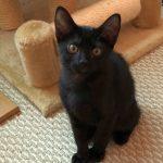 Beauty Squad kitten: Clairol