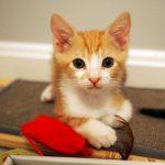 Lola's kittens: Leo
