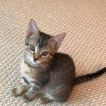 Beauty Squad kitten: Loreal