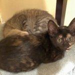 Super Cute kittens: Sephora