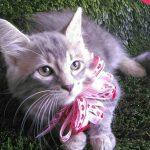 Peluza's Kittens: Beauty