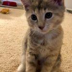 Bella's Kitten: Darla