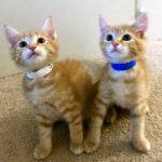 Bella's Kitten: Jack