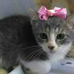 Peluza's Kittens: Kelly