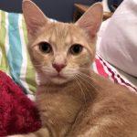 Spotsy Kittens: Alfredo