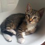 Pounce's Kitten: Apple