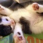 Critter Kittens: Birdie