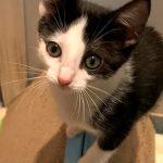 Zoomer Kittens: Carol