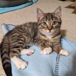 Greatest Showman Kittens: Charity