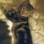 Critter Kittens: Chipmunk