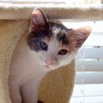 Agents of Shield Kittens: Daisy