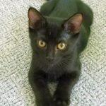 G Kittens: Granite