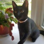 G Kittens: Gianna