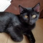 G Kittens: Gunnar