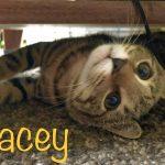 J Kittens: Jacey