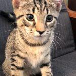 J Kittens: Jagan