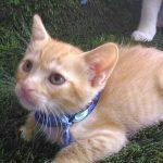 Peluza's Kittens: Joey