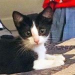 Zoomer Kittens: Kareem