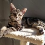 Lizzie's Kitten: Kitts