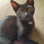 Lizzie's Kitten: Melrose