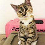 Bella's Kitten: Mixie