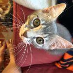 Disney Kittens: Nala