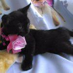 Peluza's Kittens: Nina