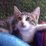 Peluza's Kittens: Nino