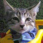 Peluza's Kittens: Nono