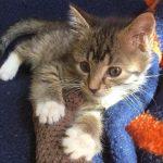 Disney Kittens: Oliver