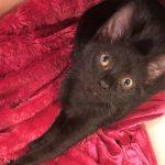 Spotsy Kittens: Pancake