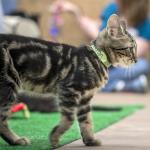 Monroe Kittens: Peyton