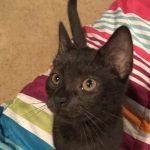 Spotsy Kittens: Phoebe