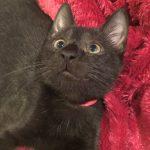 Spotsy Kittens: Piccolo