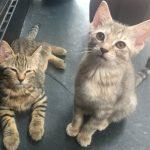 Pounce's Kitten: Pie